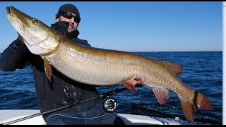 getlinkyoutube.com-Muskie fly fishing  57X26.5 World Record
