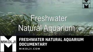 getlinkyoutube.com-Freshwater Natural Aquarium Documentary