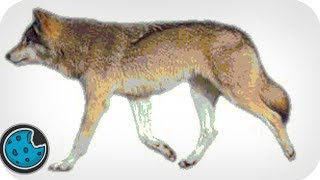 getlinkyoutube.com-Incredibly Realistic Wolf Animation