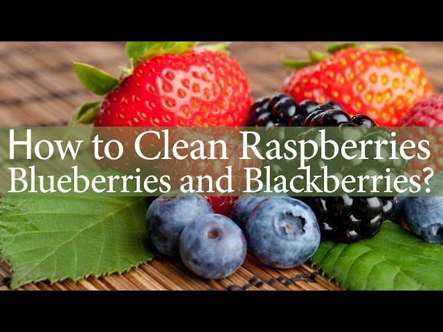 How to Clean Raspberries Blueberries and Blackberries