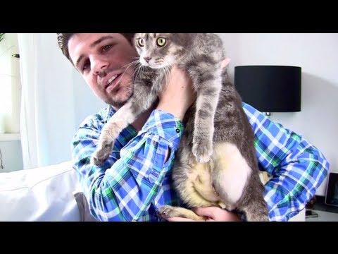 Katze mit 3 Beinen #Talk Kater Lumpi nach der Amputation