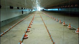 getlinkyoutube.com-How to rear chicken using Battery Cages [ Farming In East-Africa(http://westgateintegrity.com/ )]