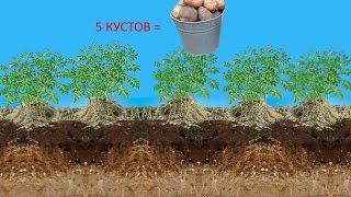 getlinkyoutube.com-Новый метод выращивания картофеля под сеном, и в мешках. Огород для ленивых на двух сотках.