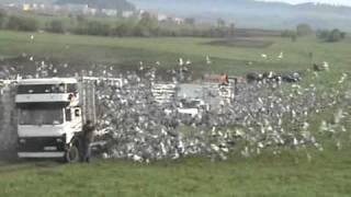 getlinkyoutube.com-Lansare Prahova FCPR - 20.000 porumbei