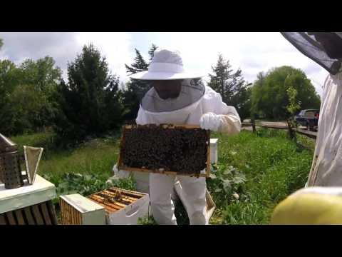 BeeKeeping / Apiary Lesson