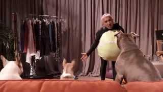 getlinkyoutube.com-Cesar Millan: Viva Las Vegas! Hilarious Deleted Scene featuring Cesar's Pack