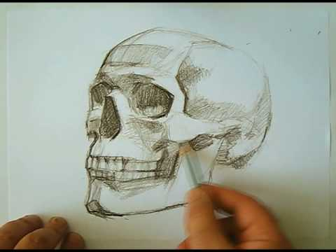 human skeleton drawing. human skeleton drawing. speed drawing human skull