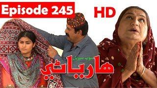 Hareyani Ep 245  Sindh TV Soap Serial    14 5 2018   HD1080p  SindhTVHD Drama