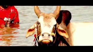 tamil  Jallikattu Album ms Song Video