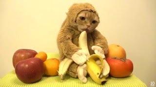 getlinkyoutube.com-Кошкаобезьяна Новогодний кот в костюме обезьяны ест бананы 2016 02.01.16