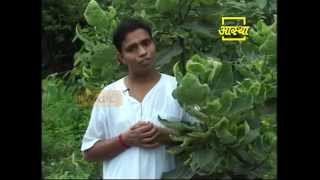 getlinkyoutube.com-Ayurvedic use Fig (Anjeer)