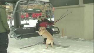 getlinkyoutube.com-avalanche dogs