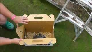 getlinkyoutube.com-The Release into the Pheasantasiam (Large Aviary)