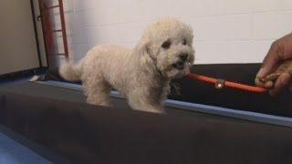 Gym for dogs opens in Washington DC