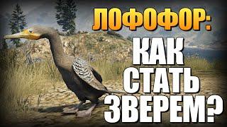 getlinkyoutube.com-GTA 5 - Как Играть за Животных? (Лофофоры) #8