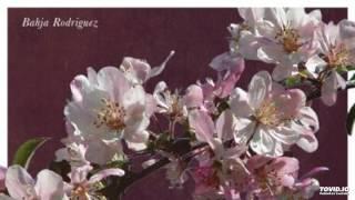 getlinkyoutube.com-Bahja Rodriguez Say It (feat. Kodie Shane)