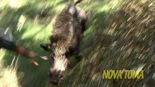 getlinkyoutube.com-Ataque de Jabali con Perros -Boar attack-