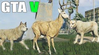 getlinkyoutube.com-Grand Theft Auto V - Play as a Animals, Cougar and more [GTAV] PS4