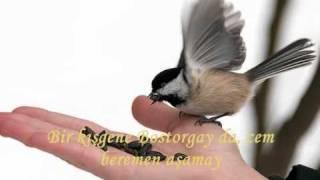 Yasemin Göksu – Bostorgay