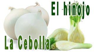 getlinkyoutube.com-La cebolla y el hinojo
