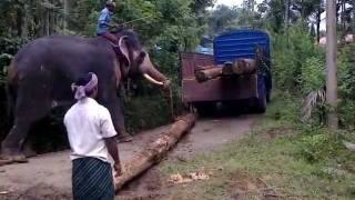 getlinkyoutube.com-Elephant Attck In Ambalavayal