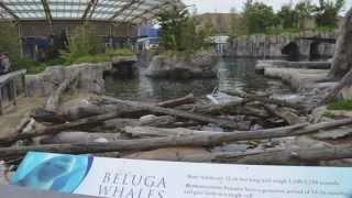 getlinkyoutube.com-Mystic Aquarium en Connecticut