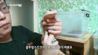 getlinkyoutube.com-MBC 다큐스페셜 - 뿔개구리, 거대거미, 악어 잡이먹는 물고기? 특이한 반려동물 총집합! 20131118