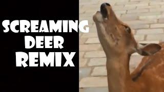 Screaming Deer - Remix Compilation