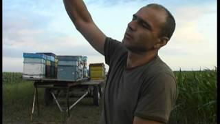 getlinkyoutube.com-За пчелите и хората