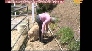 getlinkyoutube.com-Communicating with Your Heart: Telepathic Animal Communicator Carol Gurney (1/2)