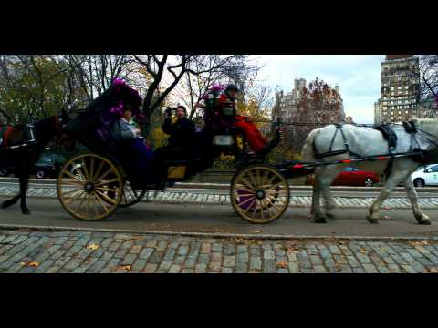 Royalty Free Stock Footage of Horse drawn carriage in Central Park, New York City.