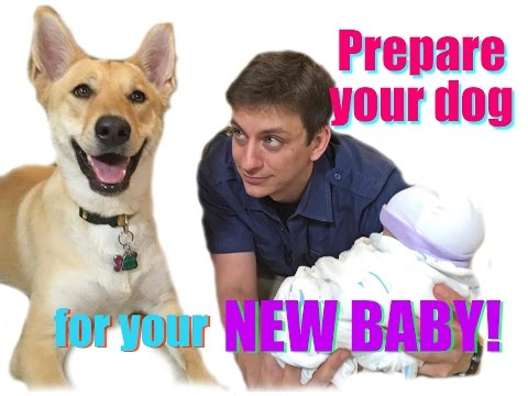 Prepare your dog for your new Baby