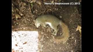 getlinkyoutube.com-Squirrel Decomposition, Time-lapse in 1 week