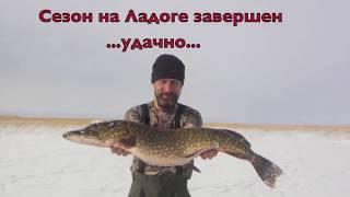 getlinkyoutube.com-Трофейная щука на жерлицы зимой на Ладоге (2012)