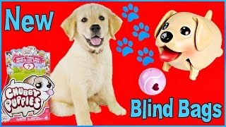getlinkyoutube.com-New CHUBBY PUPPIES  BLIND BAGS with Puppy Peppa Surprise Mystery Puppy