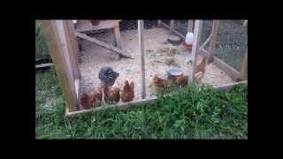 getlinkyoutube.com-My Professional Chicken Coop