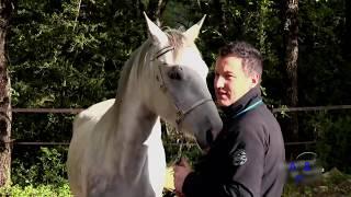 animal mating. horse natural mating width=