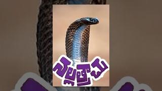 Nalla Trachu - Telugu Full Length Movie