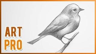 getlinkyoutube.com-How to draw a bird step by step