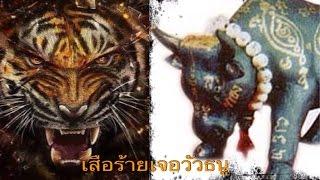 getlinkyoutube.com-เสือร้ายเจอวัวธนู love thailand
