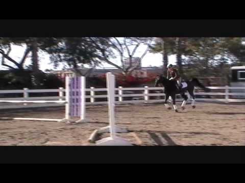 Mile High 2008 Imported Gelding Fantastic Hunter Type Kid Adult Friendly offere by Vogel Equine
