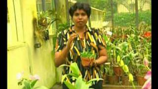 getlinkyoutube.com-orchid fertilizing