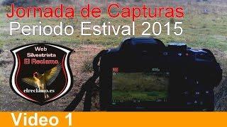 getlinkyoutube.com-SILVESTRISMO. CAPTURAS DE PARDILLOS 2015. Video 1