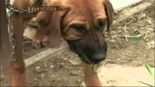 getlinkyoutube.com-굶어 죽어가는 20마리의 개들!! @TV 동물농장 20120520