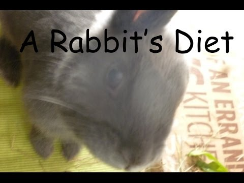 A Rabbit's Diet Rabbits101
