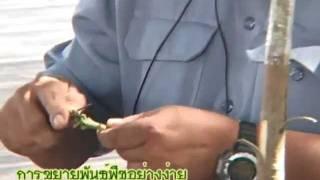 getlinkyoutube.com-การขยายพันธุ์พืชอย่างง่าย