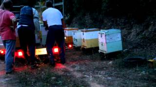 getlinkyoutube.com-Μεταφορά μελισσιών - www.EllinikoMeli.gr