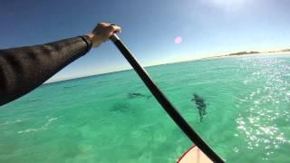 getlinkyoutube.com-Dolphin Day