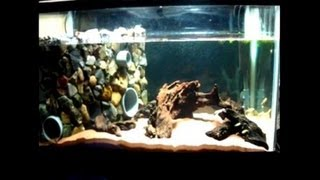 getlinkyoutube.com-イモリのアクアテラ水槽の作り方動画(fire belly newt) Aquarium Setup video