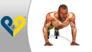 Comment muscler pectoraux, POMPES mains largeur thorax, exercices - mains largeur thorax.